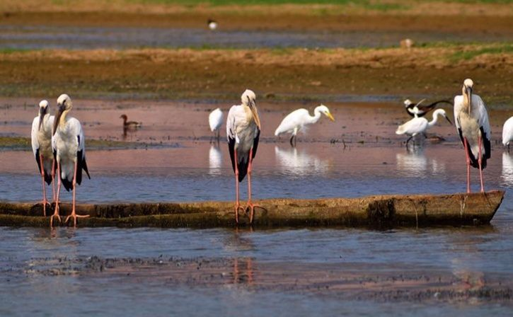 177 Species Spotted In NCR
