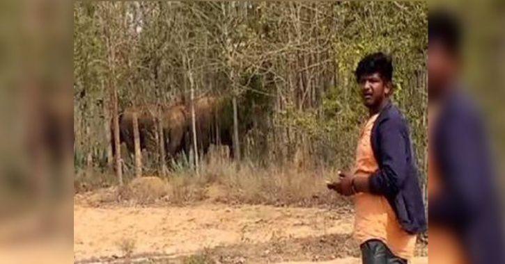 drunk Youth Kiss elephant