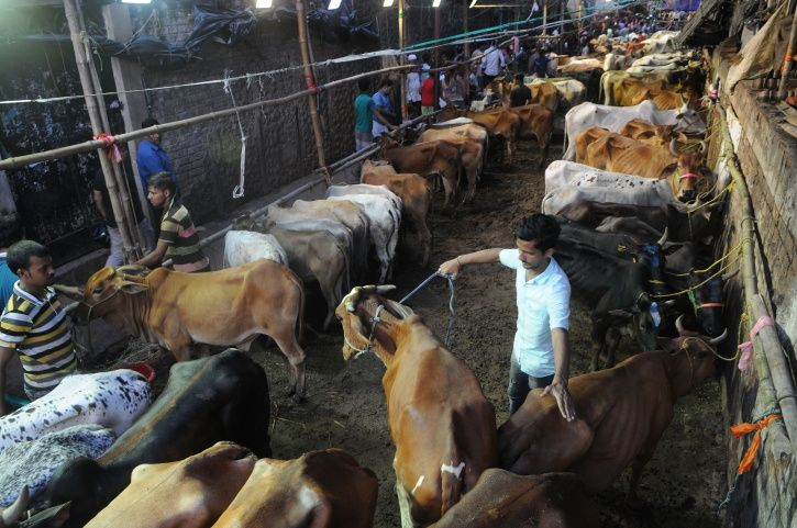Man Arrested For Raping Seven Cows At A Shelter In Ayodhya; Claims He Was Drunk