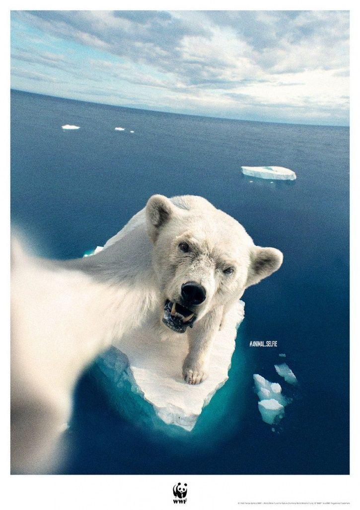 Animals Extinct