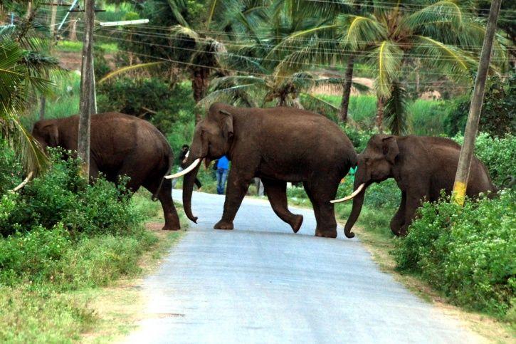 Human Elephant Conflict