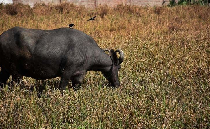 Low Cost Method To Save Crops From Wild Animals
