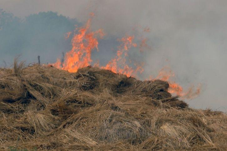 Stubble burning