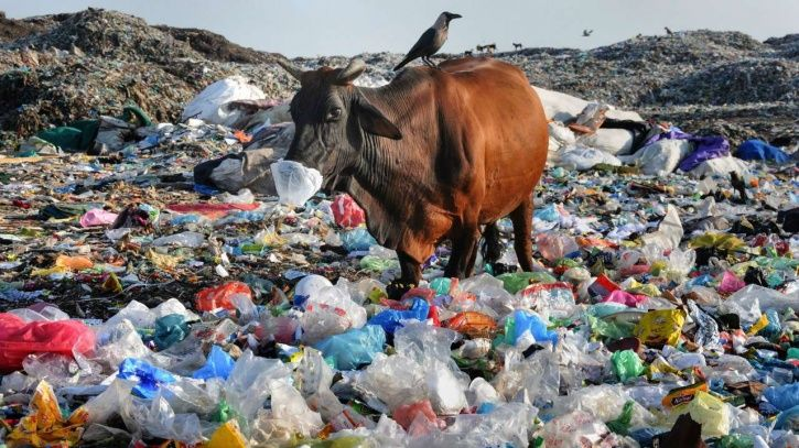 After Shelving Plan To Ban, Single-Use Plastics Won