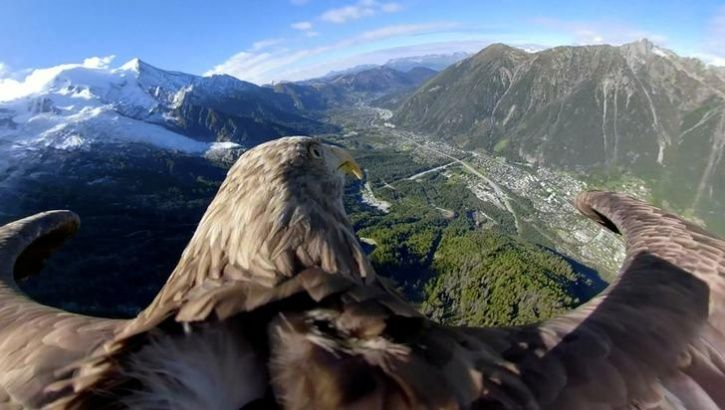 Eagle Equipped With A 360 Camera Took Flights Over Glaciers And Mountains