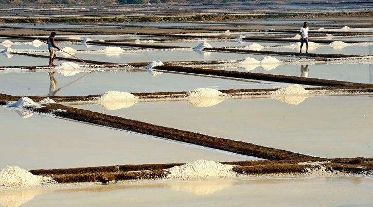 Ecologically Crucial Salt Pans, That Protect Mumbai From Floods, To Be Opened Up For 'Development'