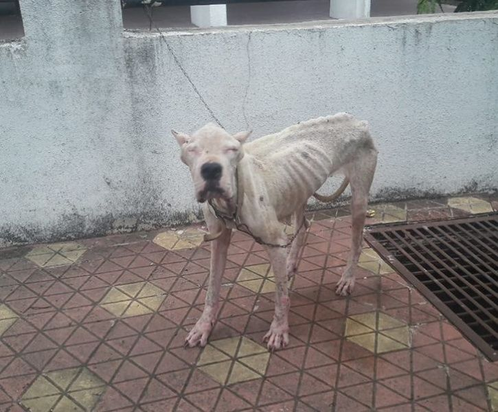 Starving Animal