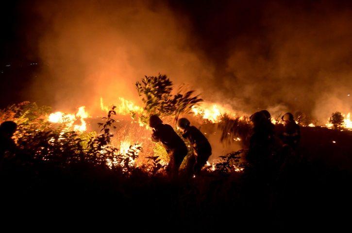 Aarey Forest Fire