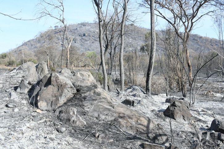 Bandipur Forest Fire