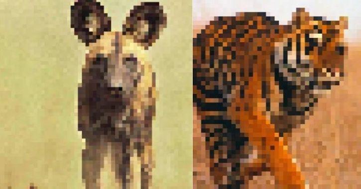 Endangered Animas