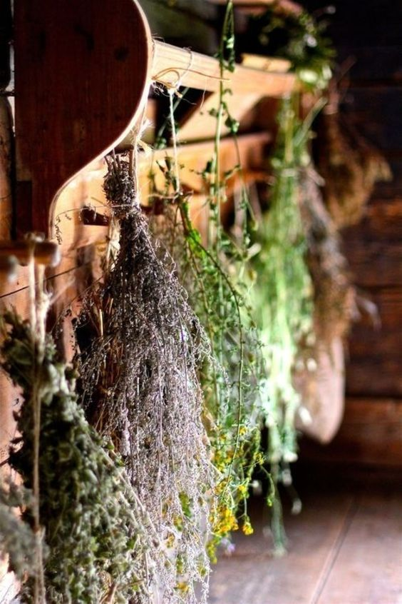 herbs to keep in your house