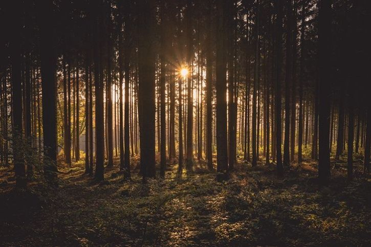 Ireland To Plant 4400 Lakh Trees By 2040