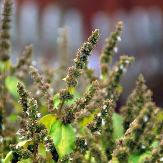 magical herbs to keep in your home