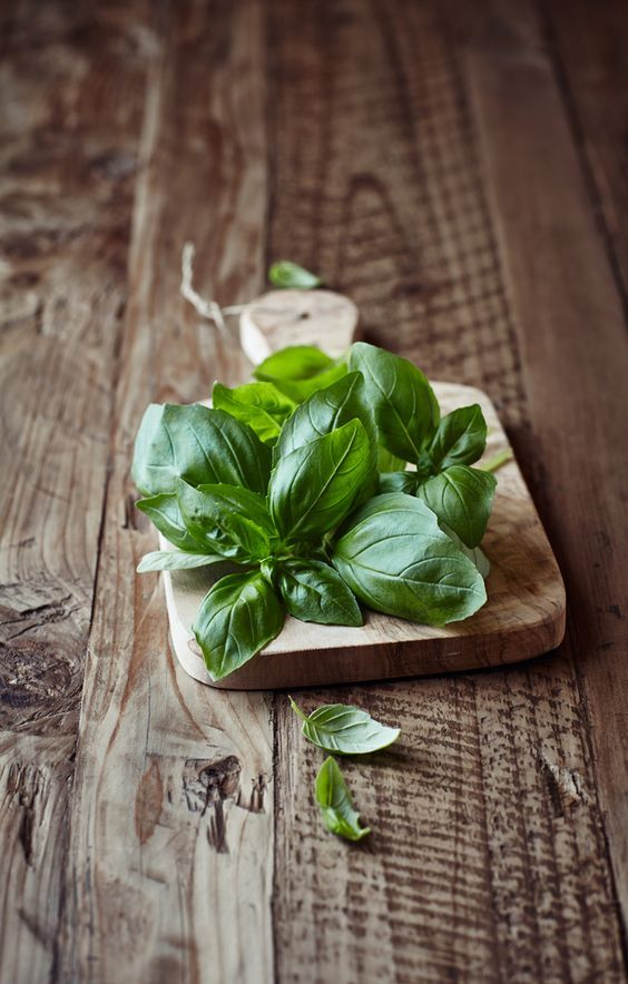 magical herbs to keep in your house