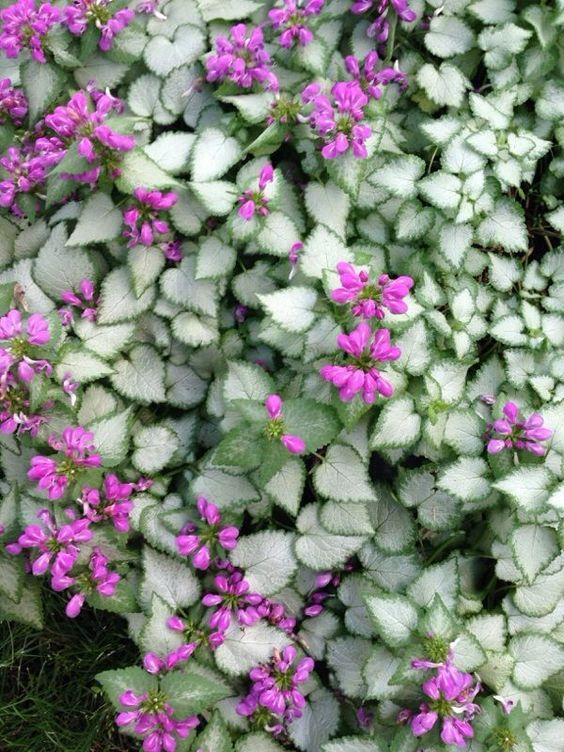 magical plants to keep in your home