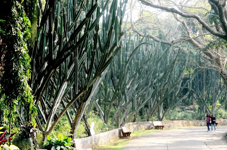 Tree Authorities Give Nod To Cut 2,700 Trees In Mumbai's Aarey Forest, Protests Follow