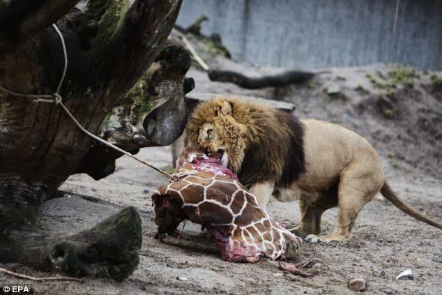 Do Animals Deserve This?