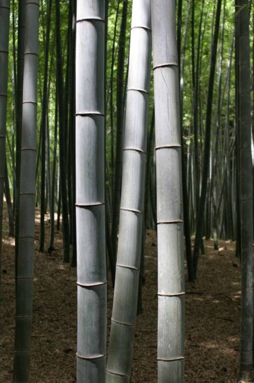 Bamboo Culture Is Now Talk Of Bengal