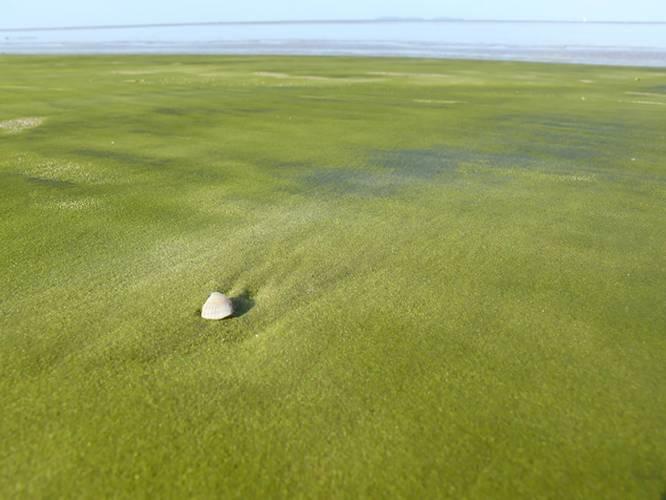 Most Bizarre Beaches Across The World - Grass Beach