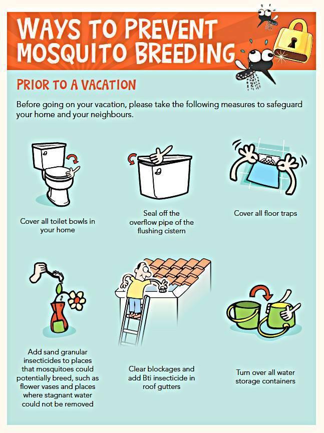 Tips To Prevent Dengue