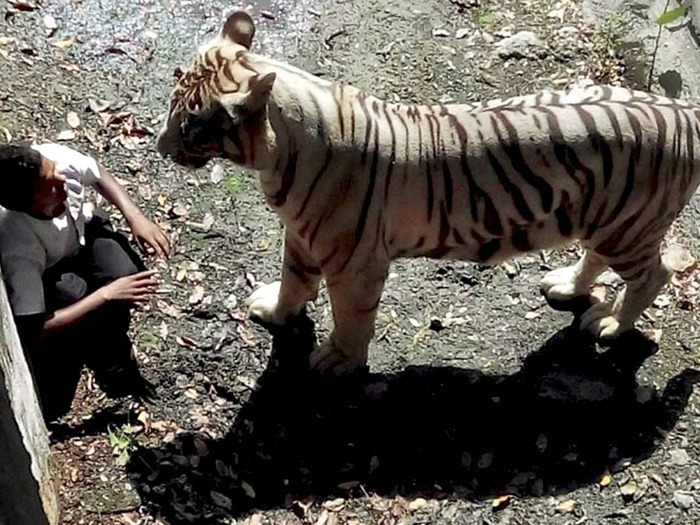 Tiger Attack: Where Were The Zoo Authorities?