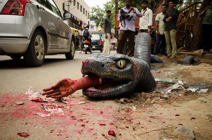 OMG: Anaconda Spotted On Bengaluru Streets!