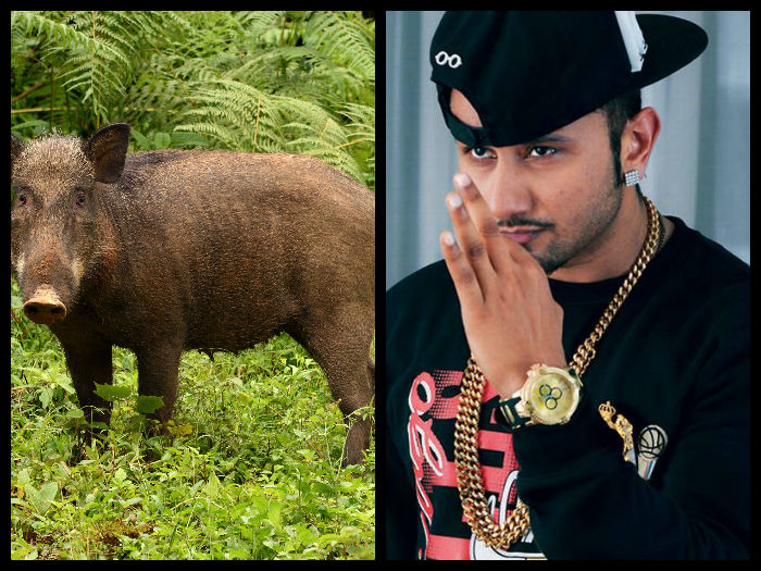 Farmers Use Honey Singh Songs To Repel Wild Boars