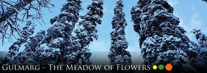 Gulmarg, India - The Meadow Of Flowers