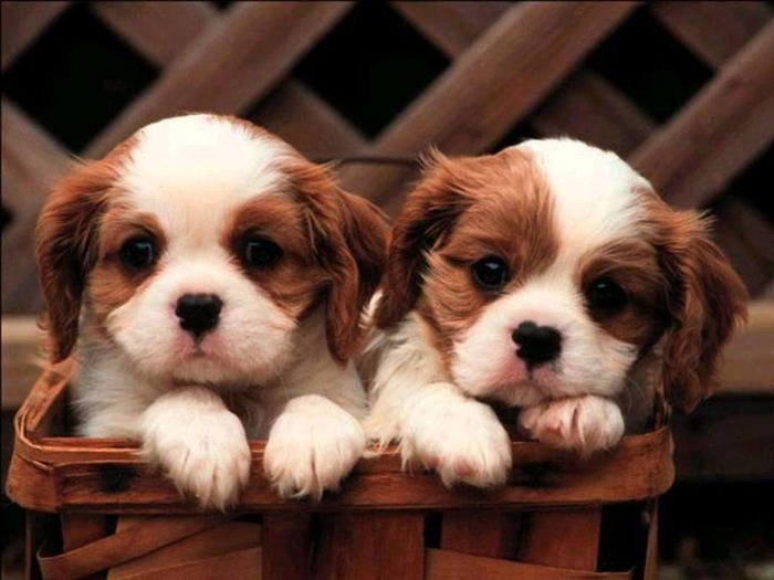 Get Ready For Warm Cuddles : Uber To Deliver You Puppies For A Playdate!