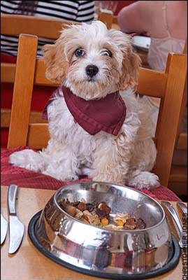 SHOULD PET DOGS BE ALLOWED IN RESTAURANTS
