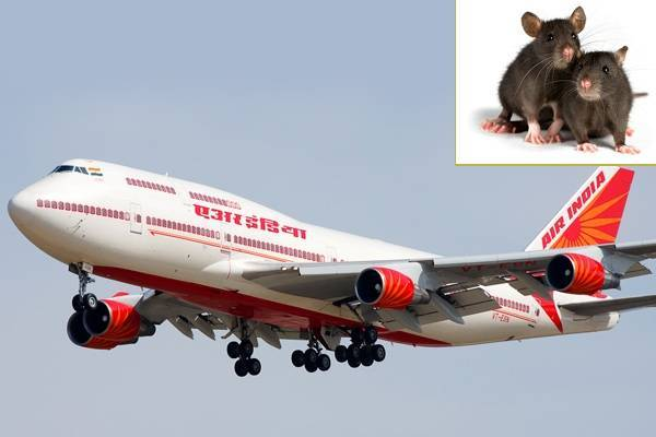 OMG: Rats Found In An Air India Aircraft!