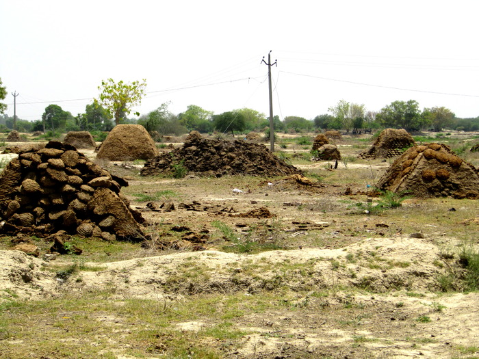 Dalit Family Forced To Eat Cow Dung In Hisar, Haryana