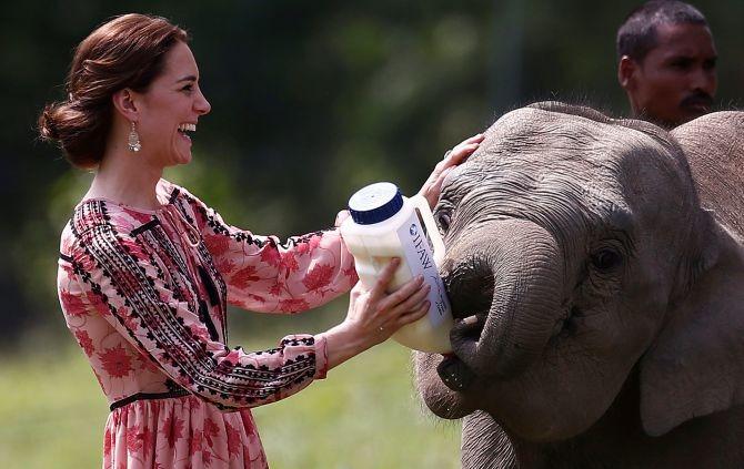 Prince & Duchess Of Cambridge Explore Wildlife At Kaziranga