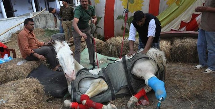 RIP Good Soul: Police Horse Shaktiman Passes Away