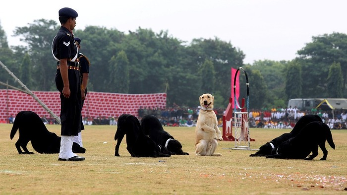 Unsung War Heroes: Meet The Heroic Service Dogs Of India!