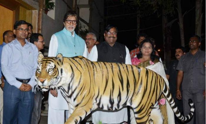 Congress To Remove Amitabh Bachchan As The Tiger Ambassador Of Maharashtra