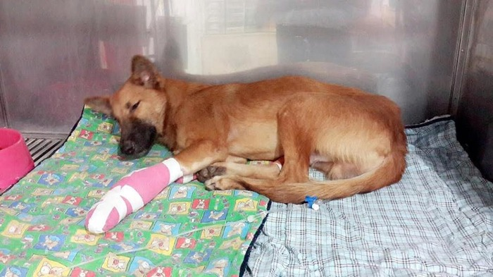 Dog Gets A New Lease To Life After Man Hacks Off His Legs