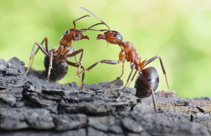 The World Of Ants Is Wonderful