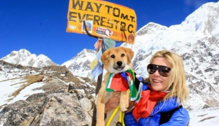 Meet Rupee, The First Dog To Conquer Mount Everest