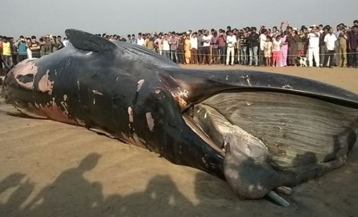 A Shocking Event At Juhu Beach Left All Locals Stunned. Details Inside!