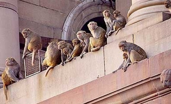 LOL: Here's What Happened When A Monkey Entered The Parliament