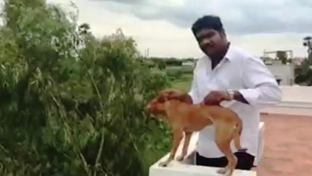 Sick Man Identified: Chennai Man Throws A Dog From The Rooftop