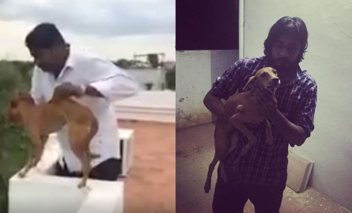 Medical Students Who Threw Dog Off A Roof Arrested; Get Bail Within 40 Minutes