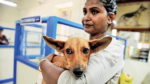 Bhadra: The Dog Who Survived The Fall Had Near Death Experiences Before