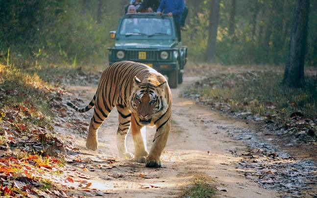 5 Best Places To Go Tiger Spotting In India