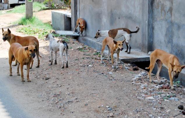 50 Stray Dogs Burnt Alive In A Village In Tamil Nadu