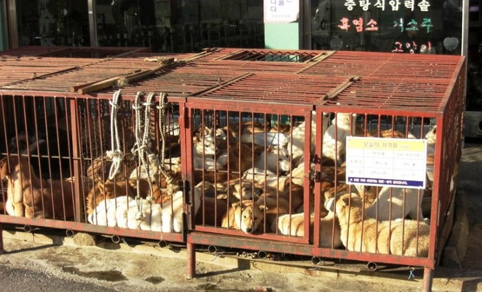Chinese Dog-Meat Vendors Cover Their Signboard Ahead Of Yulin Festival