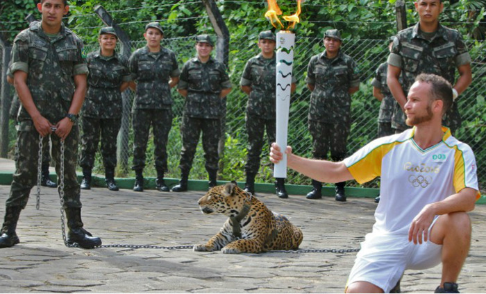 Rio 2016 Apologises After 'Mascot' Jaguar Shot Dead At Olympic Torch Ceremony