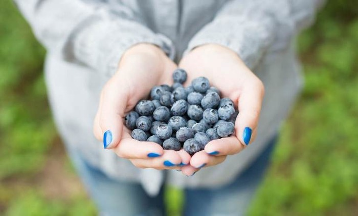 Do You Know Blueberries Can Improve Vision And Memory?