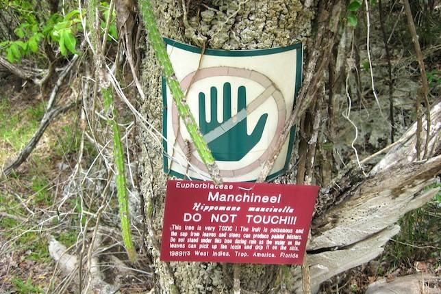 If You Stand Under This Tree Or Touch It, You'll DIE!